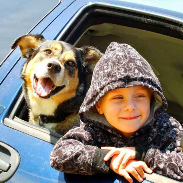 Tierversicherung