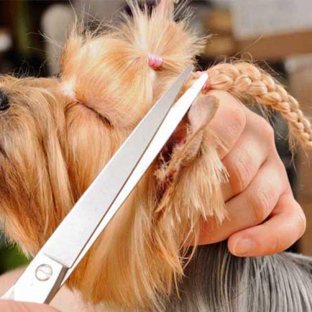 Hundefriseure