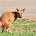 Durchfall bei Hunden - wann ist das gefährlich?