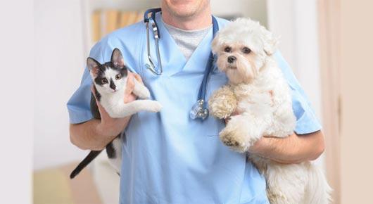 Tierärztliche Klinik fur Kleintiere