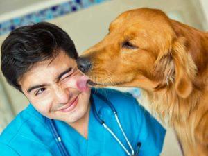 Alles Tiere Tierarzt Allgemein
