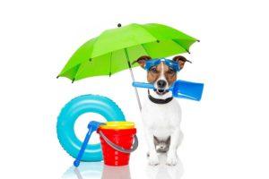 Alles Tiere Urlaub mit Hund