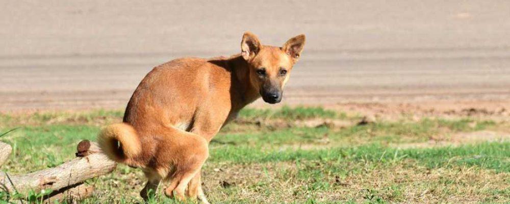 Durchfall bei Hunden – wann ist das gefährlich?