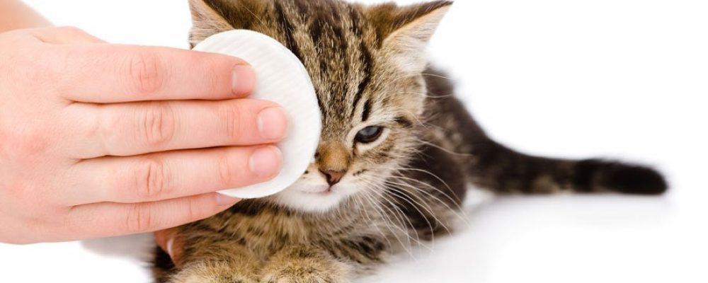 Katzenschnupfen – Behandlung und Vorbeugung